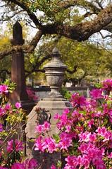 DSC_8897 (scsmitty) Tags: princegeorgewinyahchurch cemetery gravestone azaleas georgetownsc georgetown