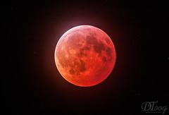 Lunar Eclipse 2019 (Delberson Tiago) Tags: lunar eclipse 450d nasa nightsky