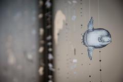 Claudia Losi e Sabrina Mezzaqui - Di mano in mano di passo in passo 2017_2 (anto291) Tags: vetrinedilibertà lalibreriadelledonne fabbricadelvapore arte artecontemporanea art contemporaryart