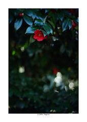 2019/3/9 - 9/21 photo by shin ikegami. - Lomography New Jupiter 3+ 1.5/50 L39/M (shin ikegami) Tags: sony ilce7m2 sonyilce7m2 a7ii 50mm lomography lomoartlens newjupiter3 tokyo sonycamera photo photographer 単焦点 iso800 ndfilter light shadow 自然 nature 玉ボケ bokeh depthoffield naturephotography art photography japan earth asia