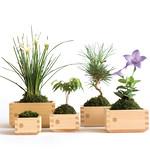 盆栽の写真