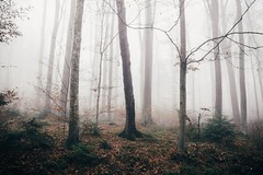 Moments of Grey (desomnis) Tags: forest viennawoods woods trees nebel nebula mist waftsofmist heavyfog mysticalforest canoneos6d 6d canon6d canon sigma35mmf14 sigma35mmf14art 35mm sigma35mmart austria niederösterreich loweraustria österreich desomnis nature