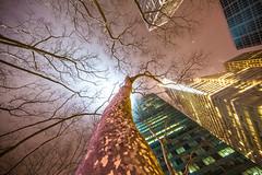 Feel Me Now (Thomas Hawk) Tags: america manhattan nyc newyork newyorkcity usa unitedstates unitedstatesofamerica architecture