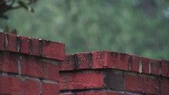 Rain on brick wall close up 2 (Ricardo's Photography (Thanks to all the fans!!!)) Tags: video b roll anthem park florida nature sony saintcloudfl centralflorida cinematic videolibrary freevideos 1080pvideos 1080p freefootage footage sonyvideos