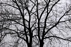 1PRO_1911 (Radu Pavel) Tags: radu radupavel pavel fotononstop cosmos ©radupavelallrightsreserved ©radupavelallerechtevorbehalten ©radupaveltodoslosderechosreservados ©radupavel版権所有 nature natur naturaleza 自然 tree baum árbol 木 outdoor alairelibre imfreien ルーマニア world welt mundo 世界 winter invierno 冬 neural 神経の 2019 abstract abstrakt abstracto 抽象