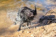 20190215-IMG_8705 (Alderbabbsack) Tags: struppi hund
