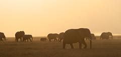 P1010182 (janjanny) Tags: 2012 africananimals elephants fromaperture holidays kenya places