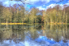 Colours reflected (ArtGordon1) Tags: eppingforest essex countyofessex winter february 2019 trees reflections reflection england uk davegordon davidgordon daveartgordon daveagordon davidagordon artgordon1 speakmanspond