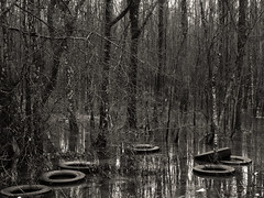 Week 8 - Water Pollution (J McCallister) Tags: wolfriver trees water river tires trash