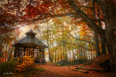 Deep forest (Jean-Michel Priaux) Tags: paysage landscape nature forest trees deep myst kiosq kiosque calm cabin babane colors autumn protection hdr priaux art way place alsace france ottrott dark undergrowth poetry