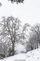 Snowy Tree - January 2019 I (boettcher.photography) Tags: winter schnee snow januar january 2019 rheinneckarkreis badenwürttemberg germany deutschland sashahasha boettcherphotography boettcherphotos dilsberg neckargemünd tree baum natur nature winterwonderland winterwunderland wintermärchen