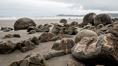 Moeraki boulders (802701) Tags: 2018 201812 43 aotearoa december december2018 em1 em1markii em1mkii mft micro43 moeraki moerakiboulders nz newzealand newzealandsouthisland omd omdem1 oceania olympus olympusomdem1 olympusomdem1mkii otago southisland beach beaches boulder boulders fourthirds island microfourthirds mirrorless naturalworld nature outdoors photography rock rocks sand sea travel travelling