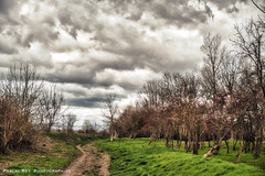 DSC_7272 (Pascal Rey Photographies) Tags: epinouze drôme auvergnerhônealpes rhônealpes valléedebièvrevalloire nature landschaft landscapes landscape horizon paysages paisaje countryside outdoor extérieur nuages gris clouds printemps springtime mars march märz pascalrey nikon d700 luminar skylum photographiecontemporaine photos photographie photography photograffik photographienumérique photographiedigitale photographierurale pascalreyphotographies