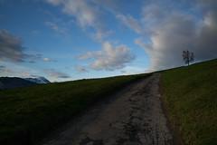 HohlgassLand (Küssnacht am Rigi) (Toni_V) Tags: m2400173 rangefinder messsucher leica leicam mp typ240 type240 28mm elmaritm12828asph hiking wanderung randonnée escursione küssnachtluzernalpnachstad hohlgassland trail wanderweg waldstätterweg sky clouds sunrise switzerland schweiz suisse svizzera svizra europe schwyz ©toniv 2019 190316
