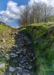 Stony Path (pollylew) Tags: stones path hillside