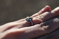 Love in the hand (krpena.lutkica) Tags: hand skin macro ring weddingrings love heart fingers sun perfect pattern