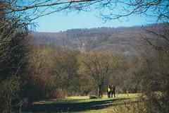 KRIS8288 (Chris.Heart) Tags: forest nature hungary pilis erdő természet túra hiking