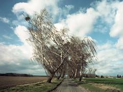 Stare (pedro4d) Tags: mamiya 645 pro tl sekor c 4528 kodak portra 160vc expired film analog medium format krajobraz landscape polska poland polen landschaft nature sky clouds weather countryside