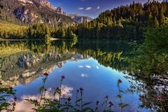 Fiori sul lago (giannipiras555) Tags: lago natura montagna alberi collina acqua fiori panorama landscape riflessi colori trentino