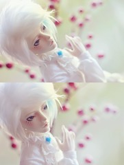 Bright Colors ☆ (Shimiro Doll Photography) Tags: bjd doll photography nikon toys pullip dolls abjd portrait bjdphotography dollphotography boy boys androgynous cute kawaii balljointeddoll msd custom withdollmai withdoll