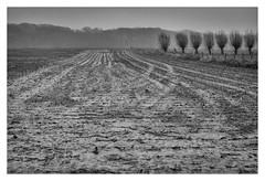 Tracks (marc.demeuleneire) Tags: selecteren landscape bw winter tracks lines agriculture ngc trees