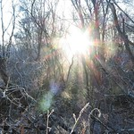 Starburst Sunlight Between The Trees by Sue Ould