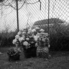pet-cemetery-memorial (kaumpphoto) Tags: rolleiflex tlr 120 bw black white cemetery dog fence saintpaul flowers graveyard suv vine grass chainlink figure pet