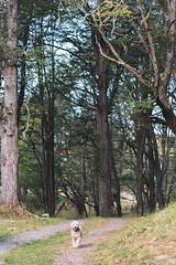 Coyhaique y alrededores (Christopher León Vilches) Tags: carretera austral coyhaique patagonia chile canon paisajes