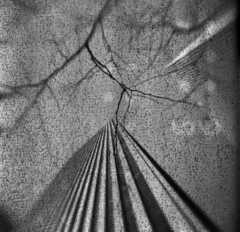 Rockefeller Center #2 (LowerDarnley) Tags: browniehawkeyeflash kodak flippedlens expiredfilm 620film nyc newyorkcity manhattan midtown rockefellercenter building skyscraper tree branches backingpaper numbers urban urbanlandscape