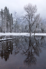 Winter Tree Reflections, Cathedral Rocks Meadow (optimalfocusphotography) Tags: usa landscape winter yosemitenationalpark nationalpark reflections yosemitenp snow northerncalifornia california yosemite trees nature cathedralrocks sierranevada water reflection mountain