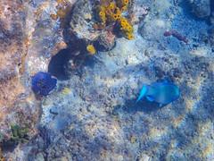 DCL March 2019 Tortola Underwater-40-2.jpg (Rhinodad) Tags: disneycruise disneyfantasy tuesday underwater 2019 dcl tortola britishvirginislands vg