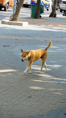 2019-02-15_15-12-27_ILCE-6500_DSC07336_DxO (miguel.discart) Tags: 148mm 2019 animal animalphotography animals animalsupclose animaux chien createdbydxo dog dogs dxo e18135mmf3556oss editedphoto focallength148mm focallengthin35mmformat148mm golfedethailande holiday ilce6500 iso100 nature naturephotography pet rivierekwai sony sonyilce6500 sonyilce6500e18135mmf3556oss thailand thailande travel vacances voyage