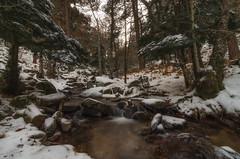 Invierno 2. (Amparo Hervella) Tags: puertodecanencia comunidaddemadrid españa spain paisaje naturaleza nieve largaexposición d7000 nikon nikond7000 atardecer