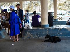 Antes del ferry (Nebelkuss) Tags: santorini puertonuevo newharbour islasgriegas greekislands callejeras street perros dogs fujixpro1 fujinonxf23f14 candid espontanea