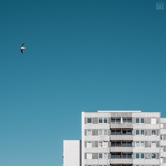 The seagull (artist:DAX) Tags: minimalarchitecture artchitecture minimalhunter bluesky artistdax ourmomentum exploretocreate ourplanetdaily cityexplorer architecture archdaily minimal deutschland germany agameoftones contemporaryphotography lensculture kiel openyoureyes urbanarchitecture minimalphototrip minimalperfection minimalexperience photographoholic 2018 criefling christianriefling dax balticsea kielerfoerde photographolic stadtentdecker schleswigholstein