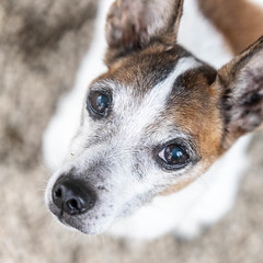 Tony15Feb201947.jpg (fredstrobel) Tags: dogs pawsatanta atlanta usa animals ga pets places pawsdogs decatur georgia unitedstates us