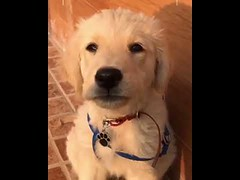 I don't pawse for pictures I'm natural - Cute Dog (tipiboogor1984) Tags: aww cute cat funny dog youtube