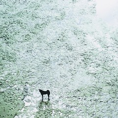 black dog on the mud (Nagawa Ryou) Tags: xc50230mm fujifilm xe2s sandbar 沙洲 台北 板橋 blackdog dog 狗 黑狗 泥灘 mud