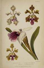 n834_w1150 (BioDivLibrary) Tags: gardening horticulture usdepartmentofagriculturenationalagriculturallibrary bhl:page=57724431 dc:identifier=httpsbiodiversitylibraryorgpage57724431 artist:name=augustainneswithers augustainneswithers hernaturalhistory