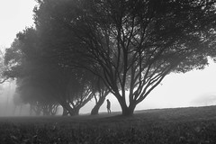 In the wild frontier, off the beaten track. (Seiko Cat's) Tags: brouillard brume fog mist trees tree person noir et blanc black white landscape portrait foggy mysterious canon people park winter grass