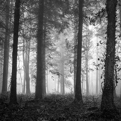 Combe Hill woods in the fog (Adam Clark Photography) Tags: 6x6 bw blackandwhite fog woods forest ilford delta 400 120 trees mist mediumformat moody morning atmosphere analog analogue film filmphoto shootfilm sharp shadow shoot bronica uk