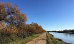 En longeant le canal du Rhône à Sète au Sud de Saint-Gilles - IMG_E5654 (6franc6) Tags: occitanie languedoc gard 30 petitecamargue décembre 2018 6franc6 vélo kalkoff vae roadbike