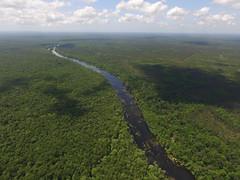 Wacissa River, Jefferson County (VISIT FLORIDA) (VISIT FLORIDA) Tags: fullrightsusage nature alligators jeffersoncounty