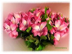 WINTER LILIES. (Viktor Manuel 990.) Tags: lilies flowers flores winter invierno digitalart artedigital textures texturas querétaro méxico victormanuelgómezg