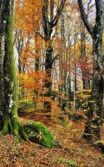 mille colori dell'autunno (Gigliola Spaziano) Tags: explore