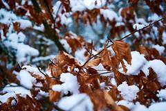 winter colors (Jos Mecklenfeld) Tags: winter snow schnee sneeuw forest wald bos nature natur natuur nulbos westerwolde sonya6000 sonyilce6000 selp1650 sonyepz1650mm niederlande nederland terapel groningen netherlands nl