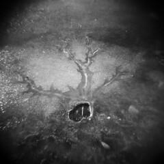 Silver Lake in Winter #45 (LowerDarnley) Tags: holga silverlake winter ice crack hole saugus ma breakheartreservation lake shore frozen