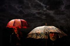 Dark Stories in Atchafalaya (Studio d'Xavier) Tags: werehere umbrella umbrellas darkstoriesinatchafalaya 417482