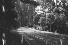 Mount Dandenong Tourist Road (Matthew Paul Argall) Tags: beirettevsn 35mmfilm blackandwhite blackandwhitefilm kentmere100 100isofilm road street mountdandenongtouristroad