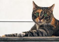 Cat (Engin Süzen) Tags: cat catportait cats catmoments catportrait gat gato gatto animal animals natgeo olympus